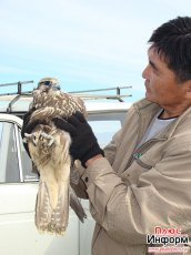 Poachers with 16 Red Book balaban falcons were arrested in Tuva