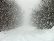 Three-day storm with blizzard in Tuva killed 170 heads of cattle