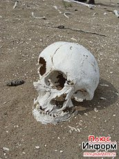 Locals from Mezhegei (Tandy, Tuva) found an ancient burial