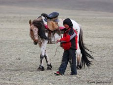 Horsemeat for dinner in 10 regions of Russia - history and today